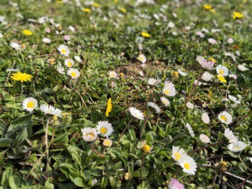 La primavera è alle porte, fiori e profumi che rallegrano lo spirito e addolciscono il cuore.