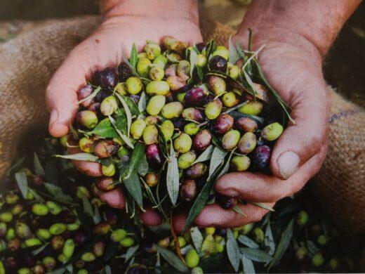 Alimenti e dita, appunti di dieta Mediterranea